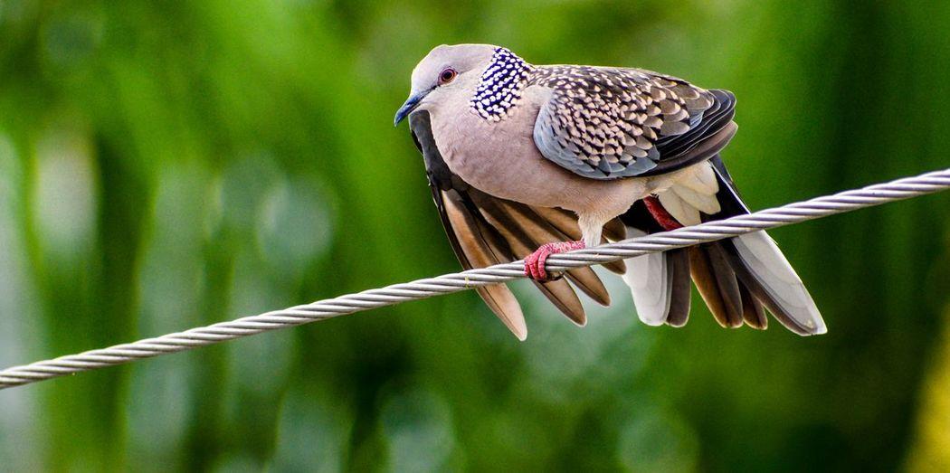 Close-up of a bird perching on metal
