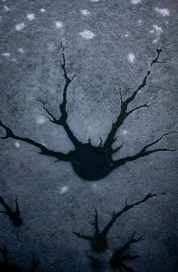 High angle view of black shadow on tree