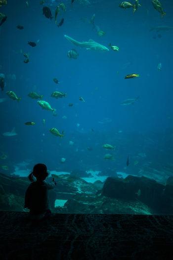 Rear view of boy swimming in aquarium