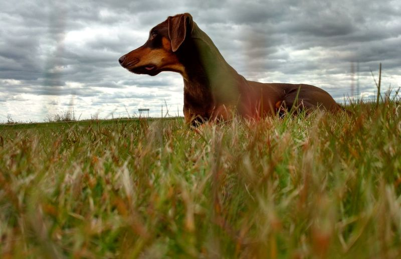 Pet Photograph Pet Pet Photography  Pets Photography Photographer Dog Animal Domestic Animals Nature Grassy Surface Level Outdoors