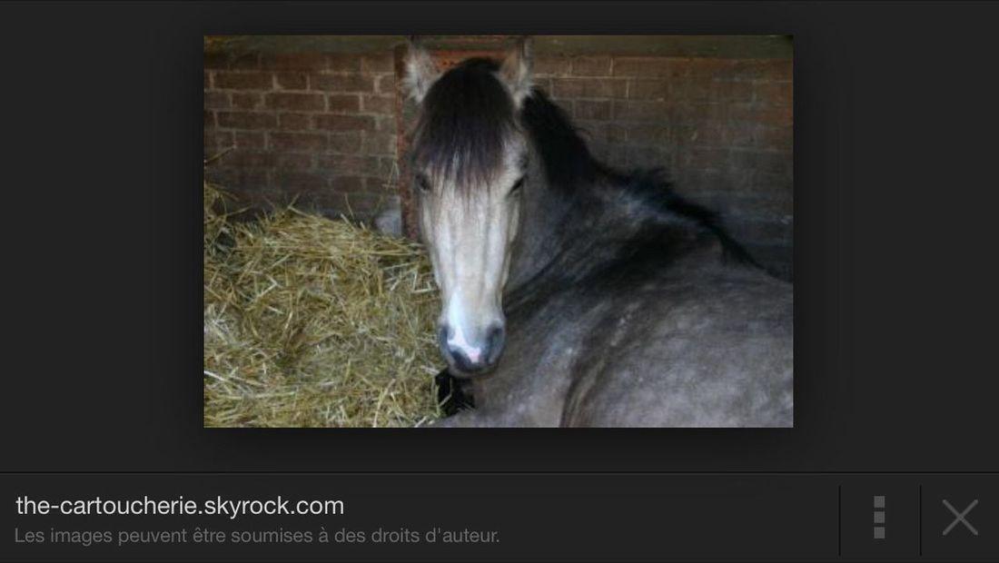 Nimbus (null)Horse IsMyLife