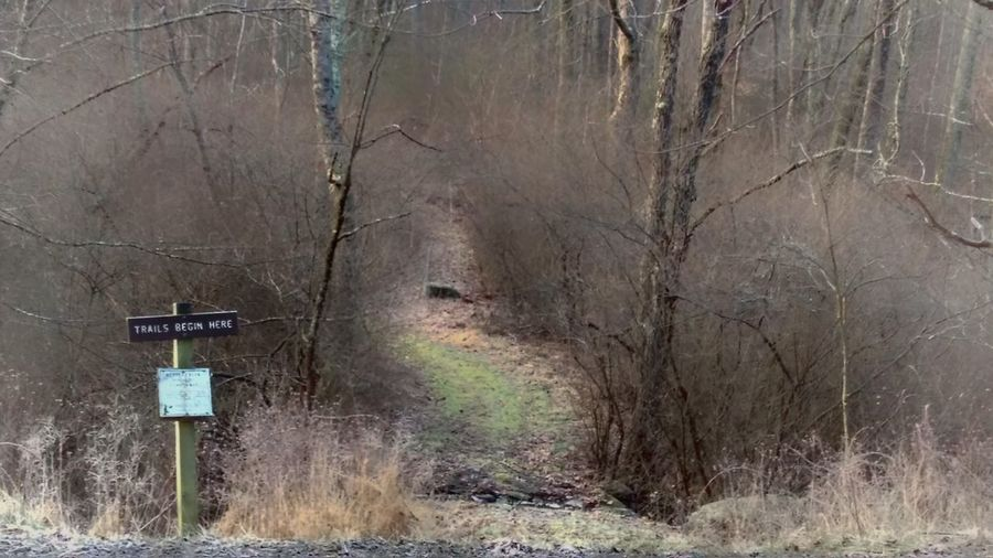 Trail Path Woods Winter Cold Temperature No People Day Outdoors Forest Tree Nature