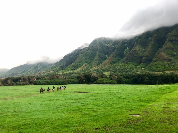 Movie Scene Kualoa Ranch Ranch Hawaii Horse Riding Mountain Grass Landscape Nature Field Agriculture Green Color Scenics Rural Scene Mountain Range Outdoors Grazing Fog Beauty In Nature Domestic Animals