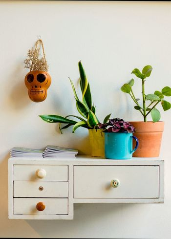 Plant Still Life Indoors  Herb No People Flower Table Nature Body Care Close-up Day White Space Portrait Of A City Wood Cabinet Plant Potted Plant Sugarskull Mexican Inspirations Design Scandinavian Eclectic Plants Wall