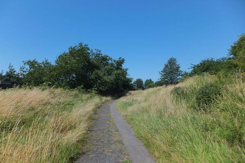 Summer in Swindon Summer Swindon Grass Path Nature