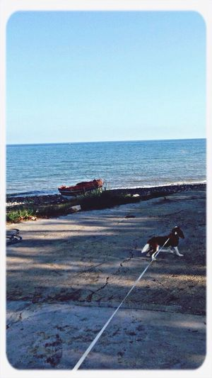 Dog Sea And Sky Enjoying Life Taking Photos