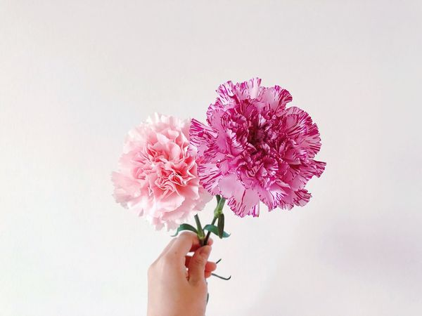 Human Body Part Human Hand Hand One Person Flower Flowering Plant Plant