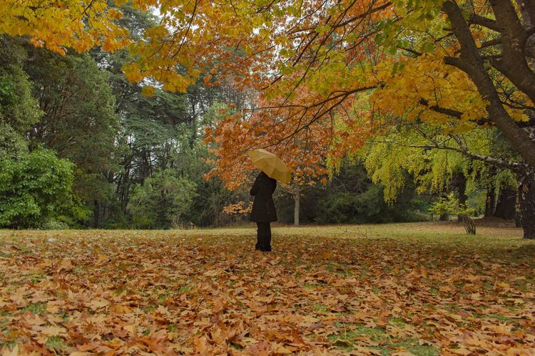 Rear view of person walking on autumn leaves