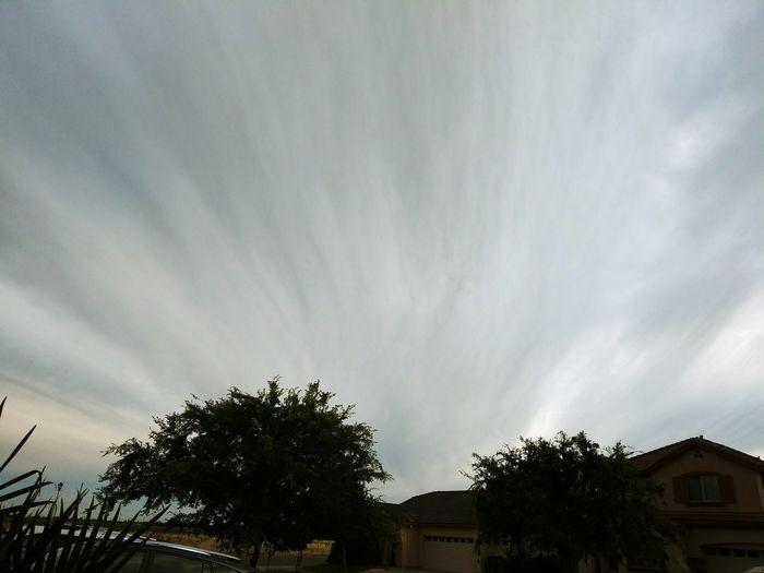 fan clouds Tree