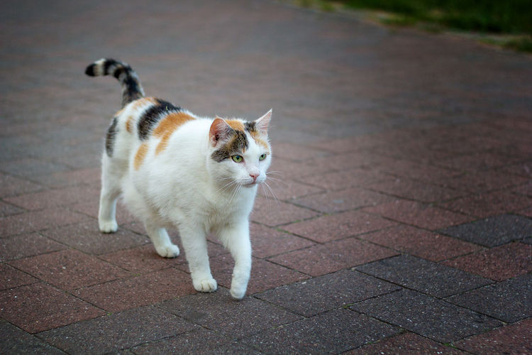 Cat looking away on street