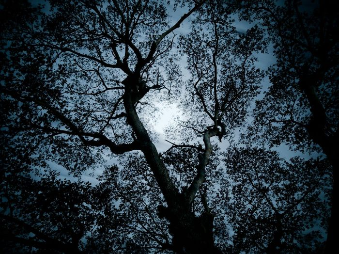 Darkness Darkness Tree Low Angle View Silhouette Outdoors Nature Full Frame Branch