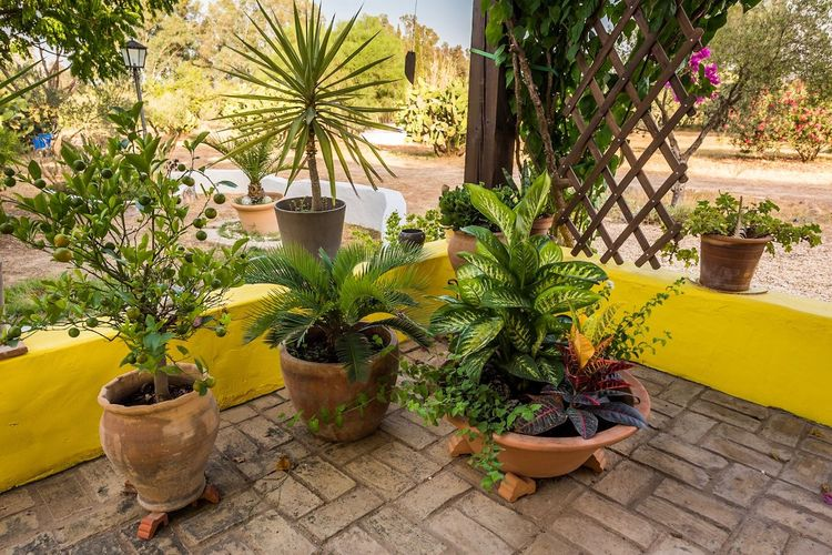 Potted Plant Plant Growth Palm Tree Outdoors Day Nature Marijuana - Herbal Cannabis No People Greenhouse