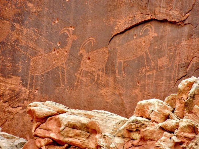 Native American Indian Fremont Petroglyphs on Sandstone Mountain Capitol Reef National Park Torrey Utah, United States of America Capitol Reef Fremont Fremont Indians Ancient Ancient Civilization Animal Animal Representation Archaeology Architecture Art And Craft Close-up History Nature No People Old Petroglyph Representation Rock Rock - Object Rock Formation Sandstone Solid The Past