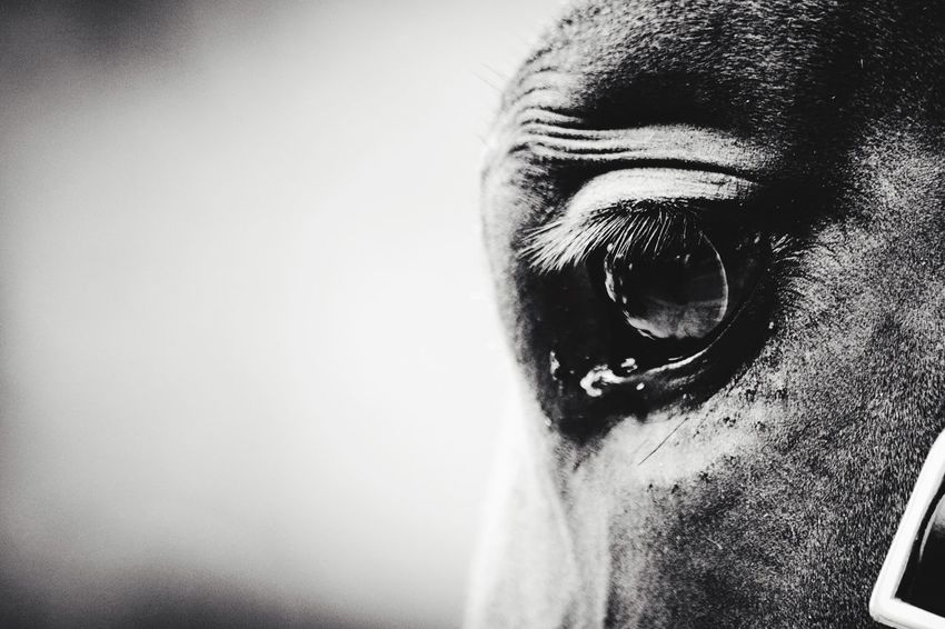 Horse Eye4photography  EyeEm Best Shots Eyes Big Eyes Taking Pictures EyeEm Nature Lover Animal_collection Animals London Market Bestsellers Feb 2016 Nature Photography Horses Blackandwhite Photography Horse Photography  Horse Riding Closeup In Nature Close Up Nature Close Up Horse Horse Eyes Nature Nature Collection Animal Themes Animal Photography Animal Head  Animal Love Market Bestsellers 2017