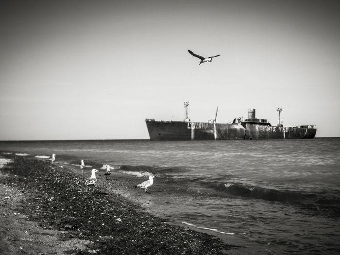 Seagull Ship