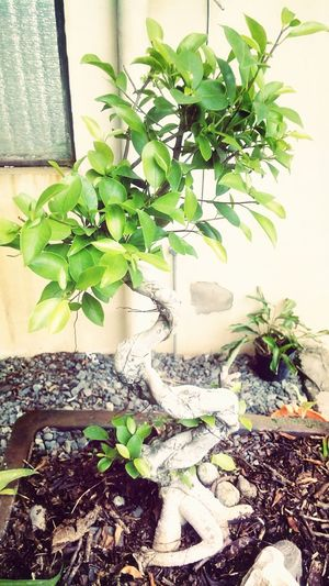 Nature Eyeem Philippines Trees Treescollection