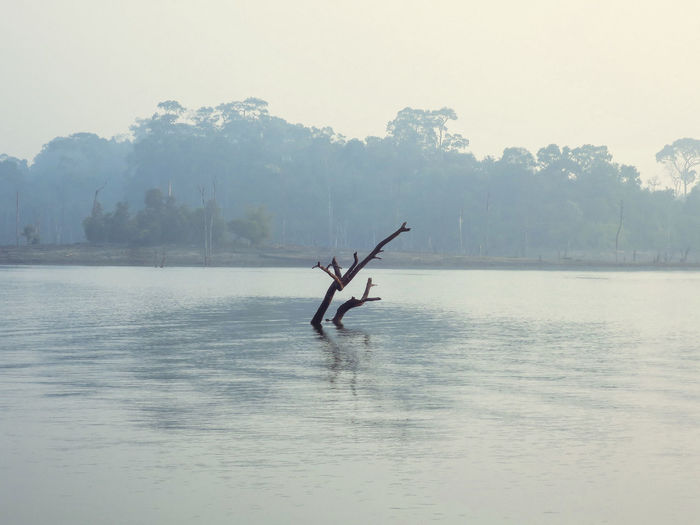 Animal Themes Beauty In Nature Day Fog Lake Laos Nature No People Outdoors Scenics Sky Tree Water