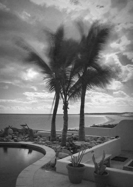 Caught in the wind Sea Beach Water Horizon Over Water Palm Tree Sky Nature Cloud - Sky Tranquil Scene Scenics Tropical Climate No People Beauty In Nature Tree Sand Outdoors Vacations Day Infinity Pool L. Jeffrey Moore Fresh On Eyeem  IPhoneography My Year My View Traveling Home For The Holidays