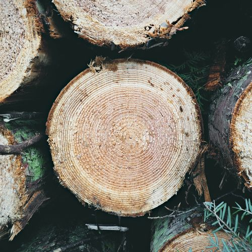 Just some logs I saw on a wee walk. Nature Tree Ring Wood - Material Log Tree Close-up Cross Section Tree Stump Nature Timber Outdoors Nature_collection Tree Trees Tree Trunk Logs Wood WoodLand Forest Forest Photography