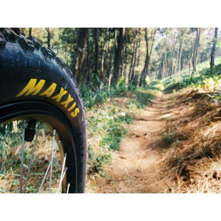Nature Downhillmountainbiking Maxxis Jungle