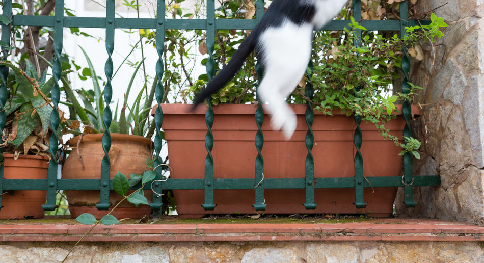 Jumping cat Outdoors No People Animal Themes Animal One Animal Domestic Flower Pot Cat Close-up Cats Jumping Too Late Latepost Slow Slow Shutter Always Late Too Fast Fast