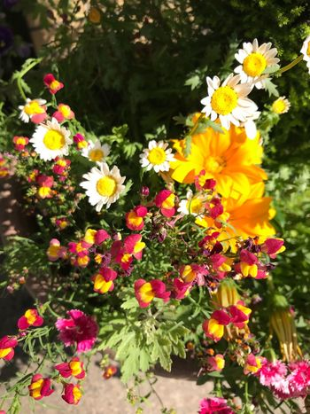 Flowering Plant Flower Plant Freshness Fragility Vulnerability  Beauty In Nature Growth Multi Colored Outdoors No People Botany Flower Head