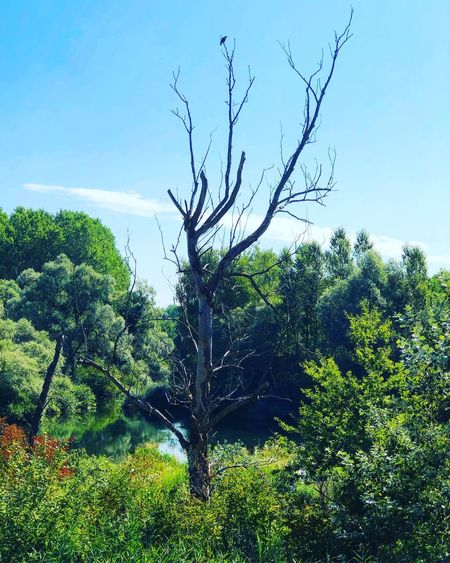 Totholz Tree
