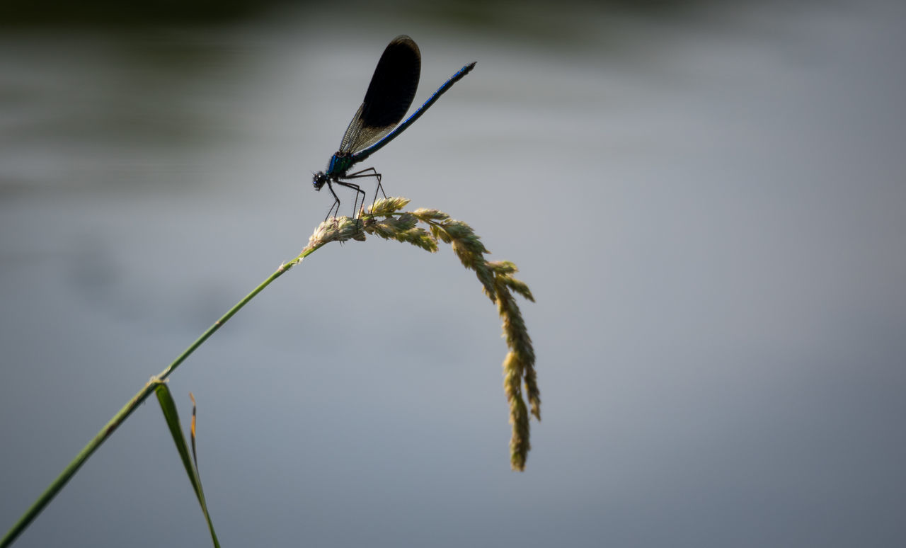one animal, insect, animal themes, animals in the wild, animal wildlife, close-up, no people, day, outdoors, nature