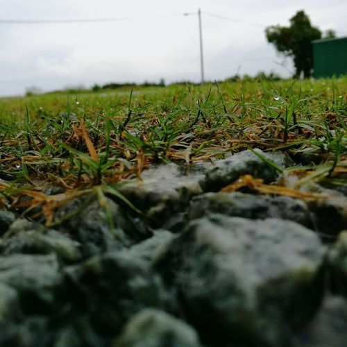 Close up. Nature Tranquility Landscape Field No People Green Color Growth Day Tranquil Scene Outdoors Grass Beauty In Nature Close-up Agriculture Tree Sky Amatuer Photographer Rocks And Water Waterdrops