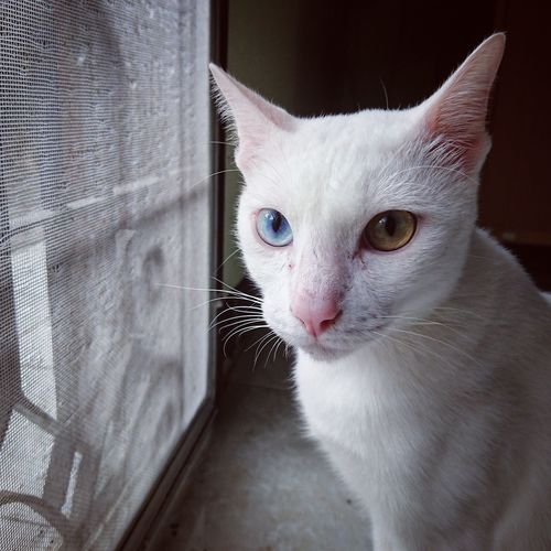 Domestic Cat Pets Domestic Animals One Animal Feline Animal Animal Themes Mammal Cute Indoors  Whisker Portrait No People Close-up Day