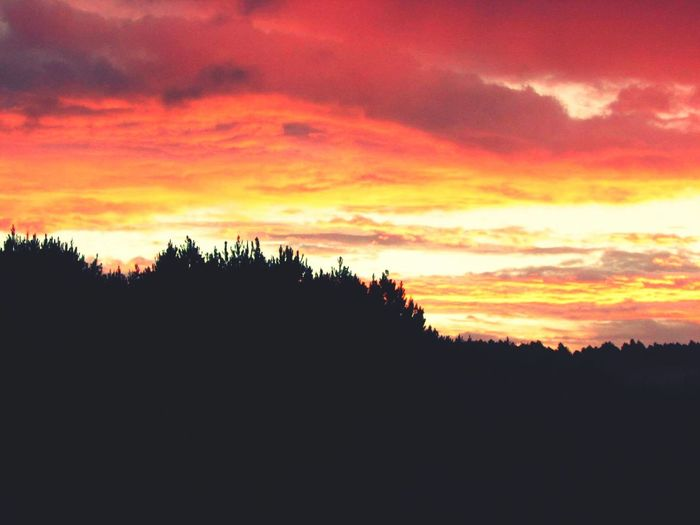 Good bye Mr Day Sunset_collection Clouds And Sky Forest Color Explosion Orange Clouds Sunset Orange Color Taking Photos Hello World Route Cloud - Sky First Eyeem Photo EyeMeCapture Sunset And Clouds  Sunset Forest Trees And Sky Red Clouds Sunsetporn Trees Silhouettes