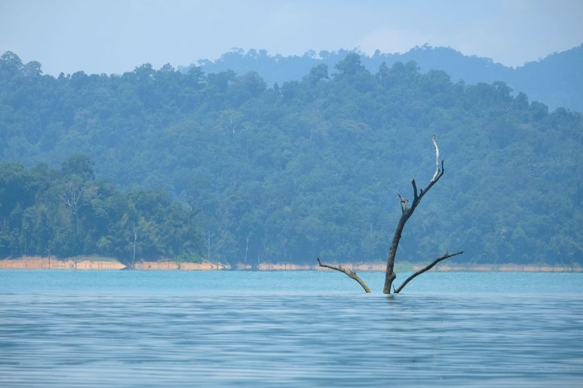 Dead tree in the sea Sea Tree Plant Mountain Nature Water No People Scenics - Nature Sky Outdoors Waterfront Beauty In Nature Vertebrate