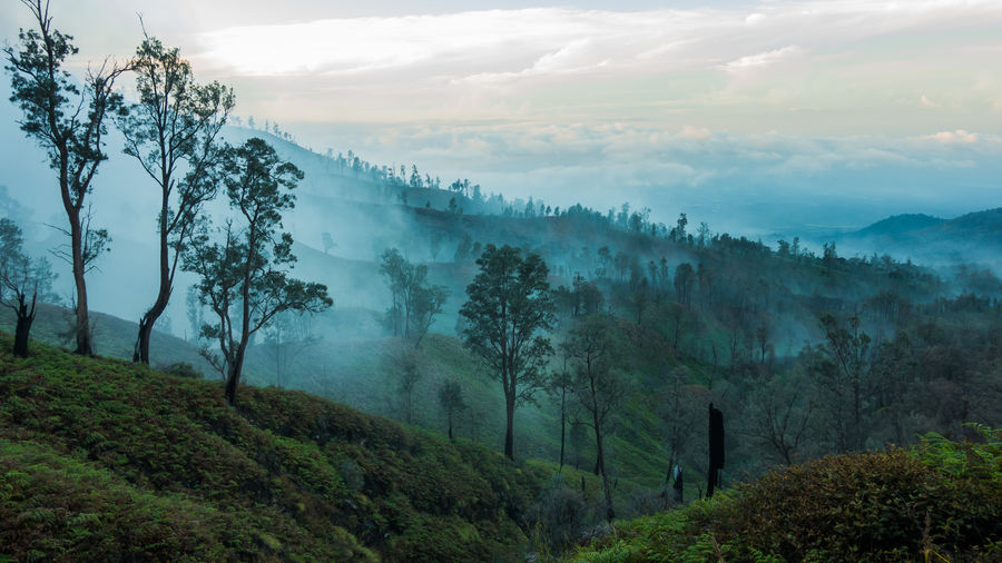 View from Mount Ijen. INDONESIA Volcano ASIA Mountain Rainforest Landscape No People Environment Fog Non-urban Scene Outdoors Hazy  Forest