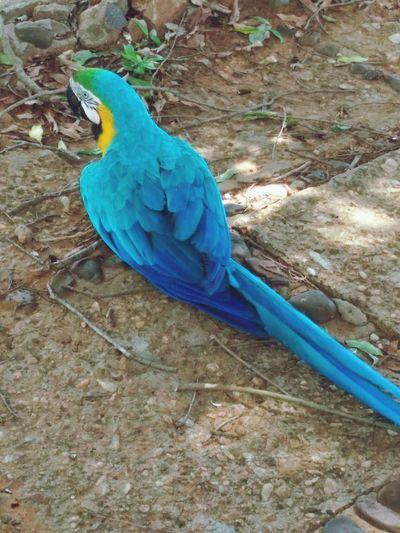 Blue bird perching on wood