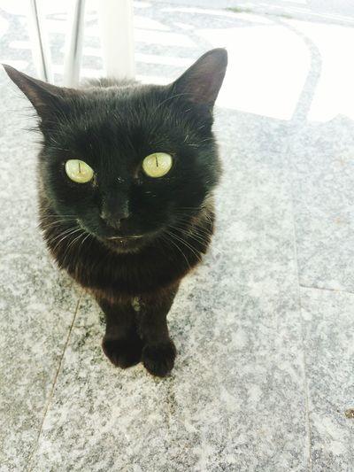Cat Gatto Gattonero BLackCat Pet Taking Photos Enjoying Life Chat Gato Pequeño