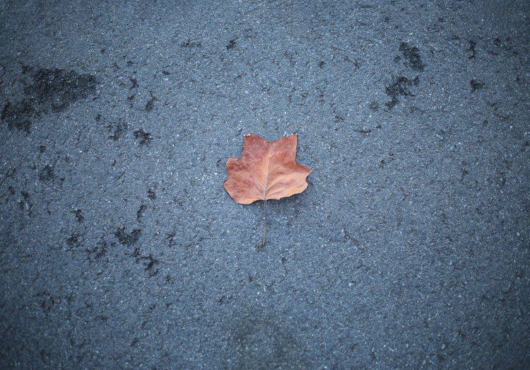 High angle view of maple leaf on street