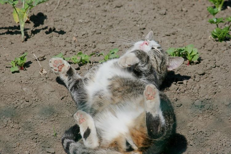 Animal Themes Close-up Day Dirt Bath Domestic Animals Domestic Cat Feline High Angle View Mammal Nature No People Outdoors Pets Sun Bathing