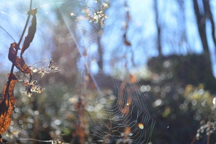 Spider Web Nature Fragility Schauinsland Germany Baden-Württemberg  Sunlight