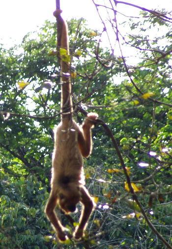 Amazon Amazonia Animal Themes Carajás Day Monkey Nature No People Outdoors Para Parauapebas Rain Forest