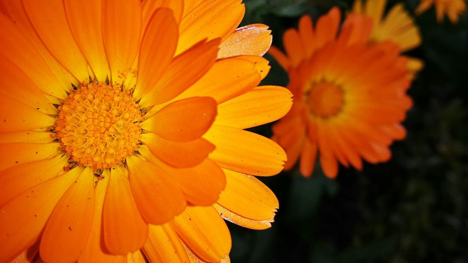 Nature Flower Okara Pakistan