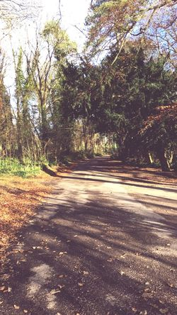 Tree Nature Road Tranquility Sunlight No People Forest Tranquil Scene The Way Forward Day Beauty In Nature Landscape Outdoors Scenics Growth Shadow