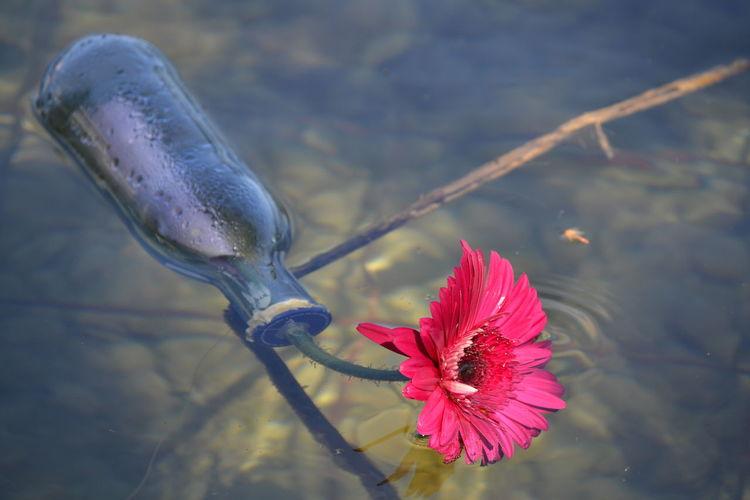 Flower Catalunya Catalonia Banyoles, Spain Florenelagua Flowerinthewater Water Lake Lakebanyoles Messageinabottle