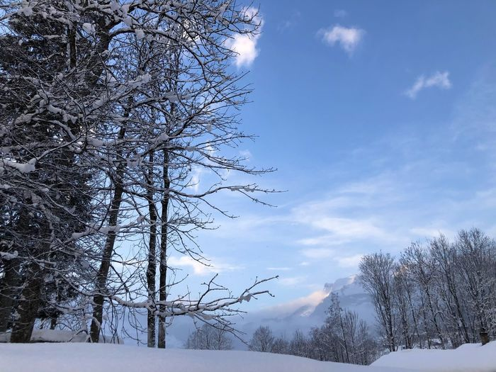 Snow covered bare trees against sky