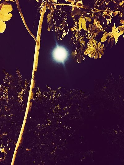 Bright moon through night trees Beauty In Nature Nature Tree No People Low Angle View Outdoors Sky Close-up Day Bright Moon