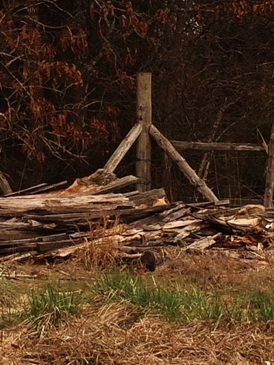 Wood - Material Nature Forest Outdoors No People Autumn Tree Day Beautiful Taking Photos Photo The Beauty Of Everyday Things Photography Fence Cat Kitty Cats Woodpile Post Woodpost Fencepost