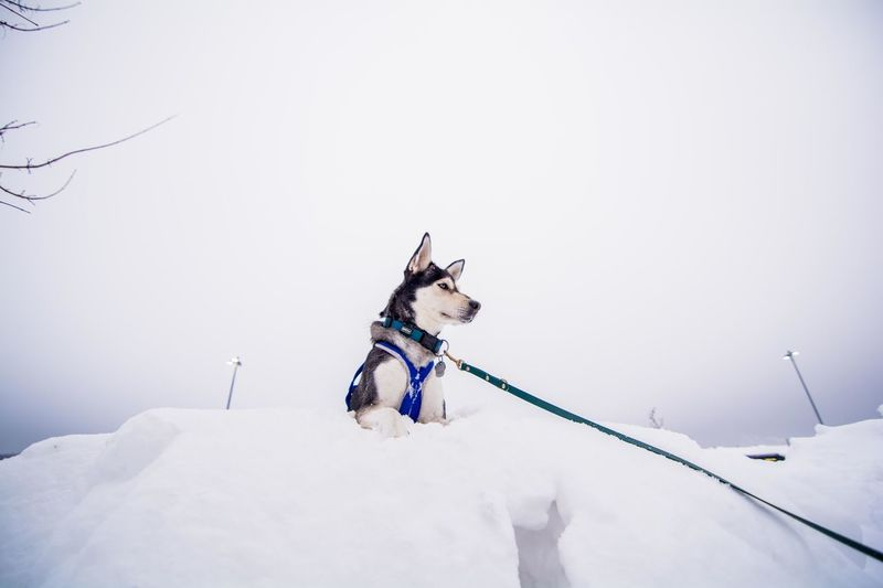 Dog On Snow Covered Landscape