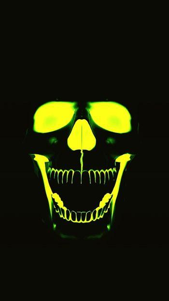 Skulls skull bones