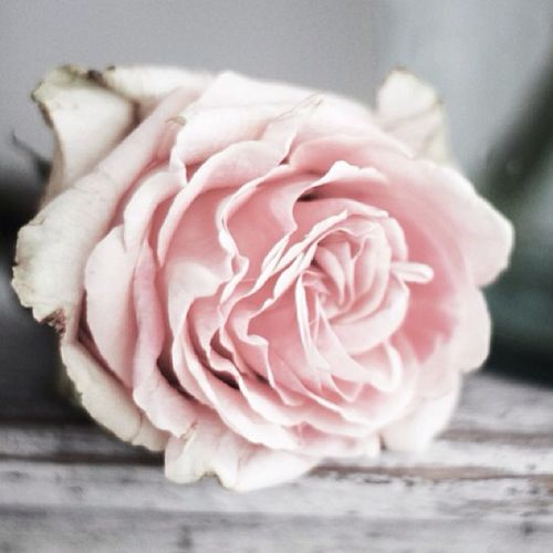 Once upon a time I asked for a sign and 'twas given to me. Now i'm stuck here wondering why this is happening... Maybeitsnotmeanttobe Imislookedthesign Thatlovelyrose