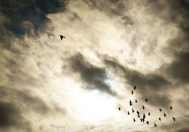 Cloud - Sky Bird Flying Sky Silhouette Spread Wings Birds In Flight Birds In The Sky Birds In Wild Beauty In Nature Sun Bright Sun Sunlight