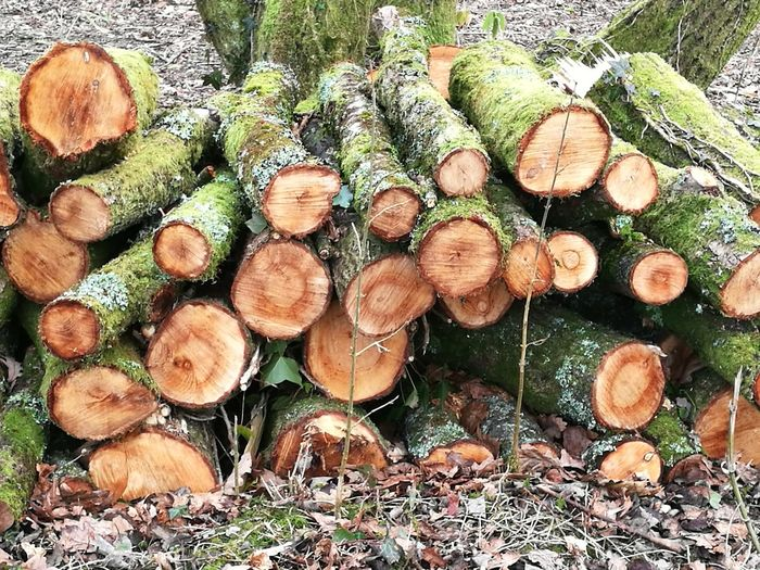 Timber Nature Lumber Industry Log Close-up Forestry Industry Outdoors Day Full Frame